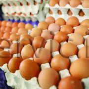 تولید و پخش مرغ و تخم مرغ