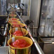 تولید و پخش رب گوجه فرنگی